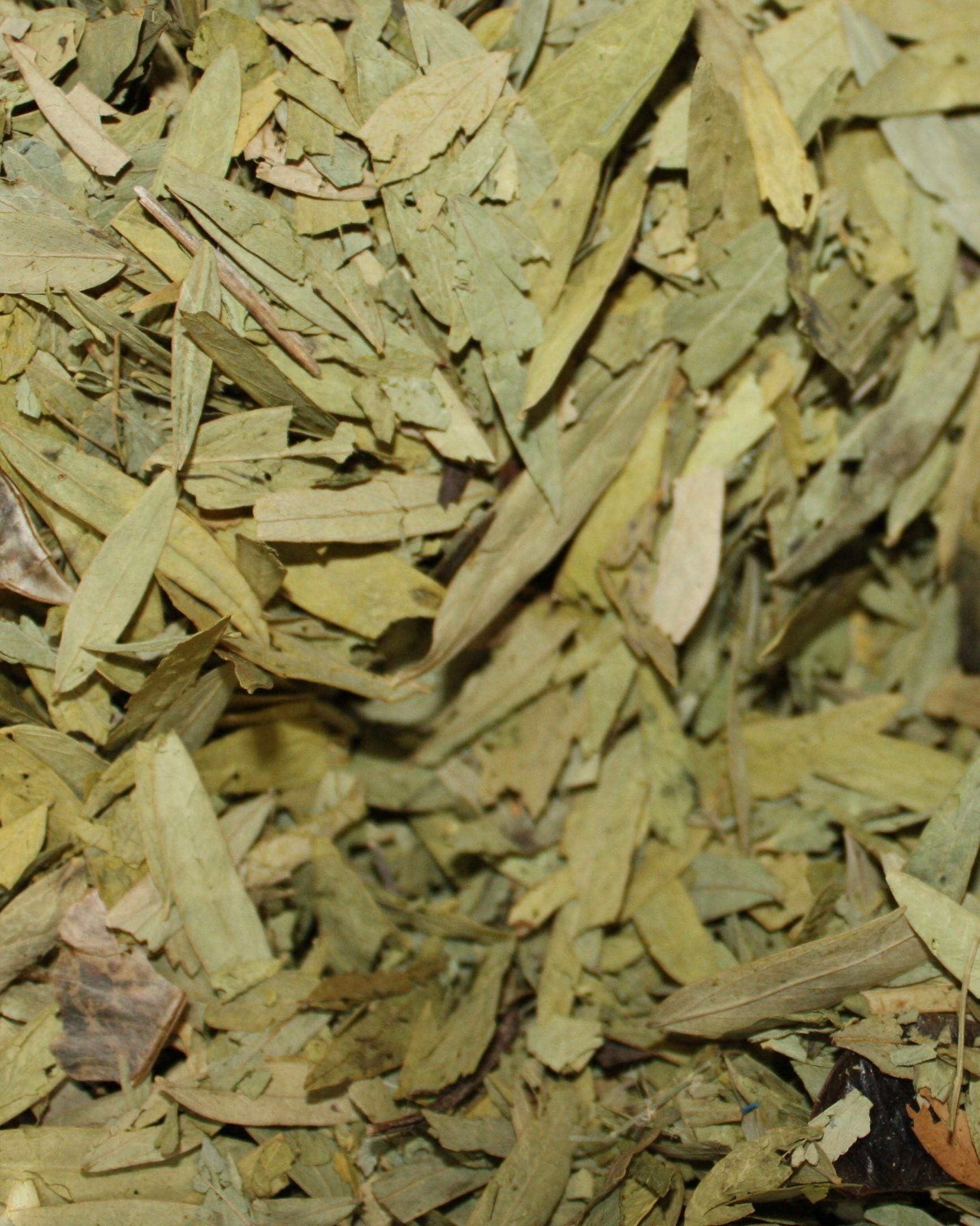 séné feuilles bio